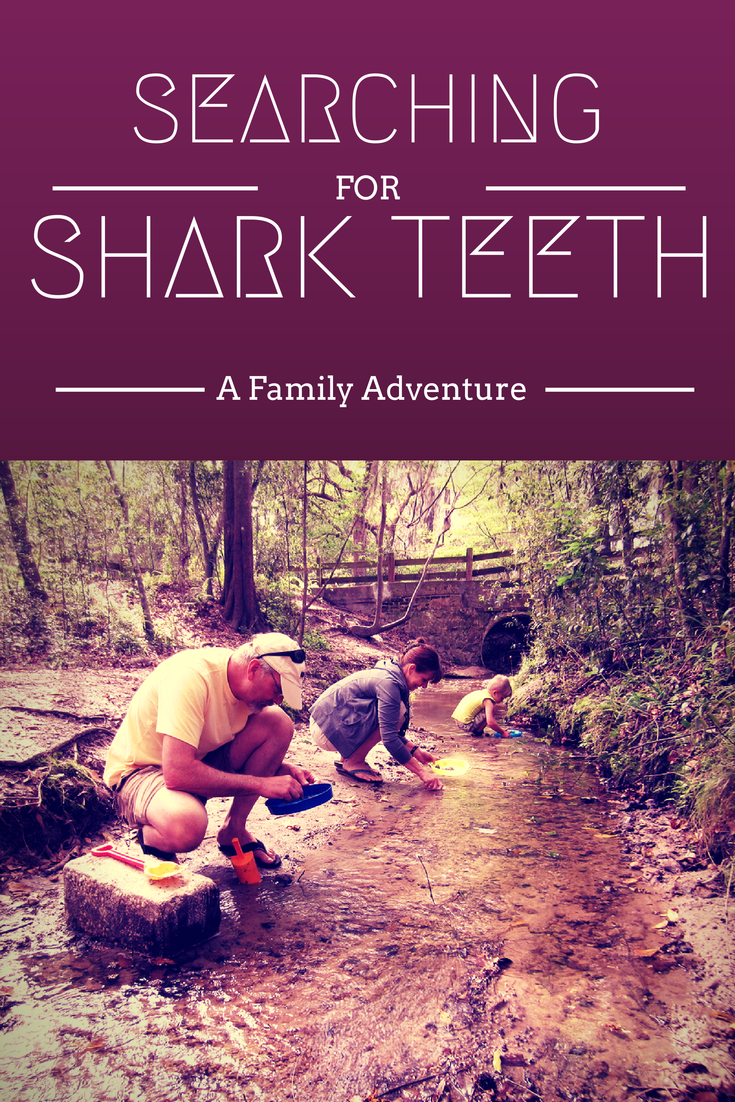 Searching for Shark Teeth: A Family Adventure