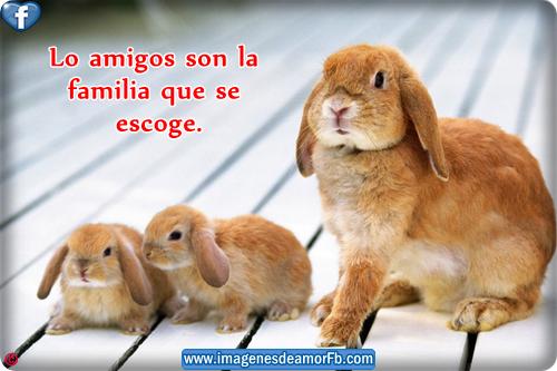 Imagenes de conejos con frases de amistad ~ Imagenes de amor con