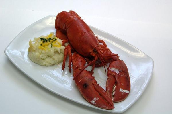 Cozinhar lagosta viva