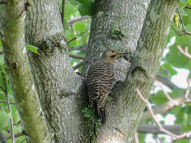 Yellow flicker bird - photo#27