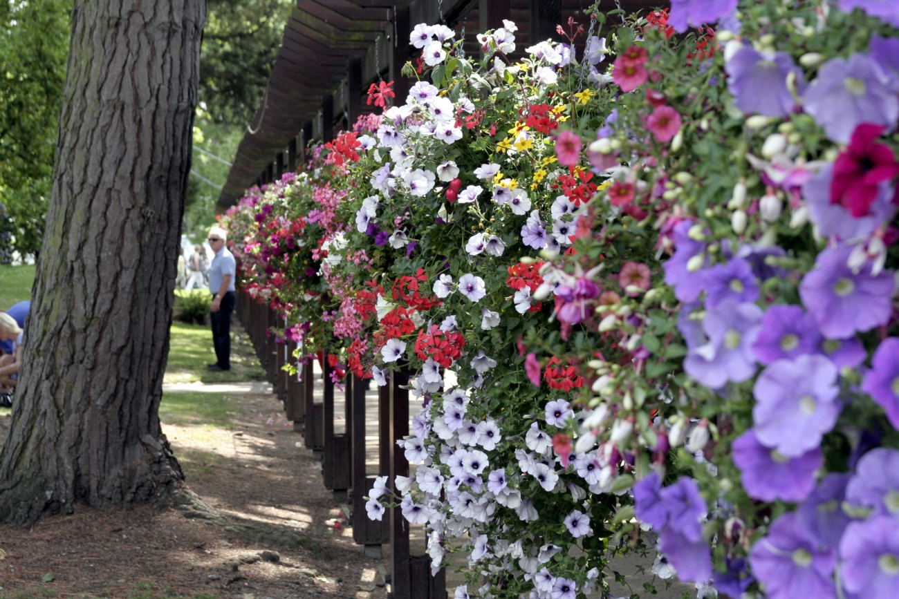 Gardening Matters: Making up Hanging Baskets
