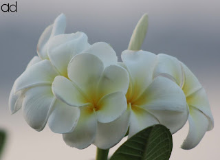 ad, ameedarji, PositiveChange, Positivity, Happiness, Peace, Goodness, Love, Life, Self, Poem, RippleinRhythm, Blackday, God
