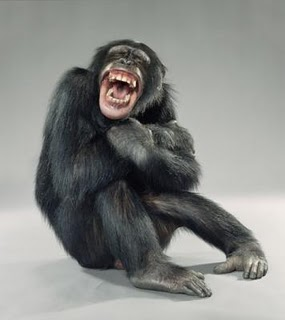 laughing-monkey.jpg