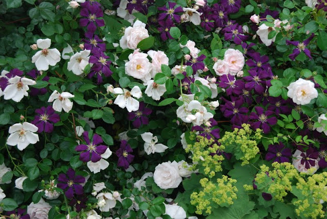 wife mother gardener garden bogger 39 s bloom day june 2011. Black Bedroom Furniture Sets. Home Design Ideas