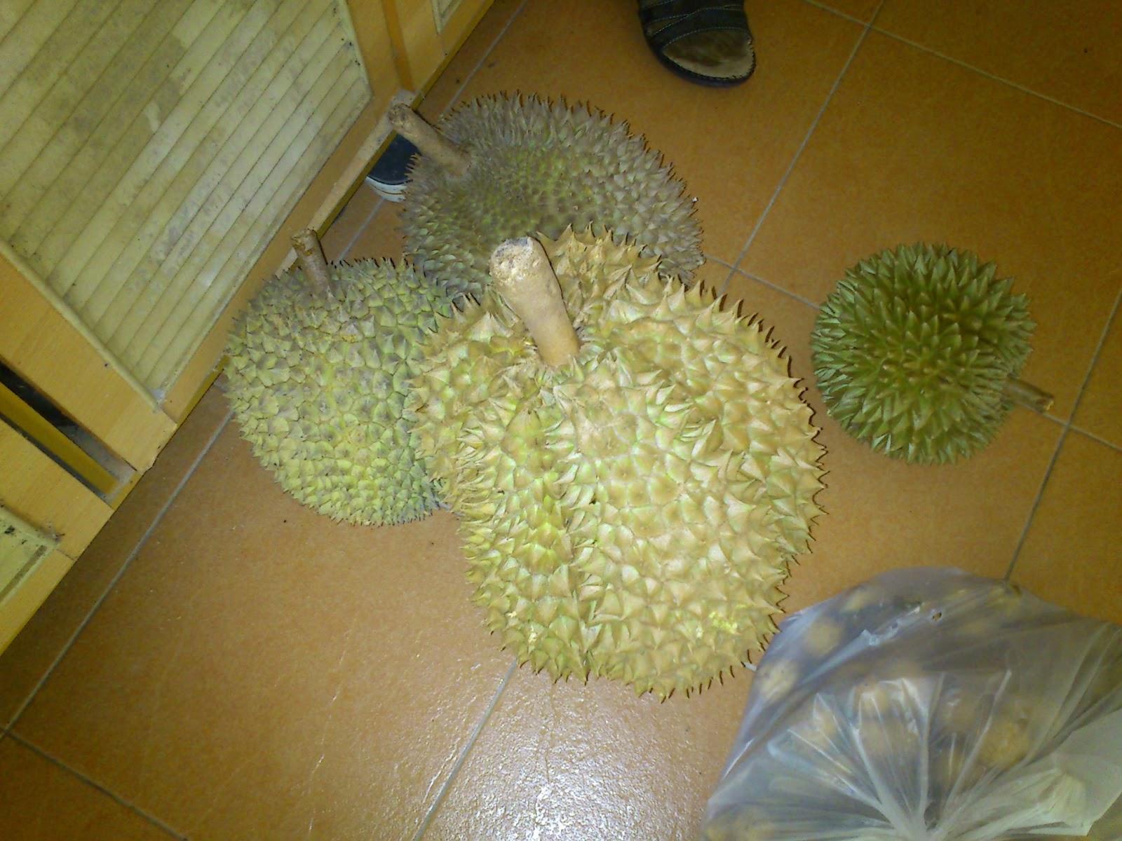 Durian gergasi