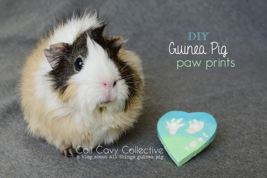 Poof with guinea pig paw print keepsake