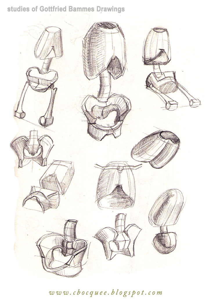 drawings of torso anatomy and structure