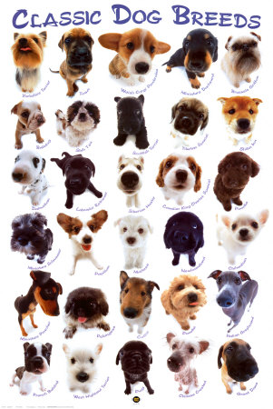 My top collection dog breeds 3