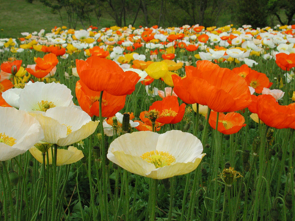 flores no jardim frases : flores no jardim frases:Flores Para Jardim