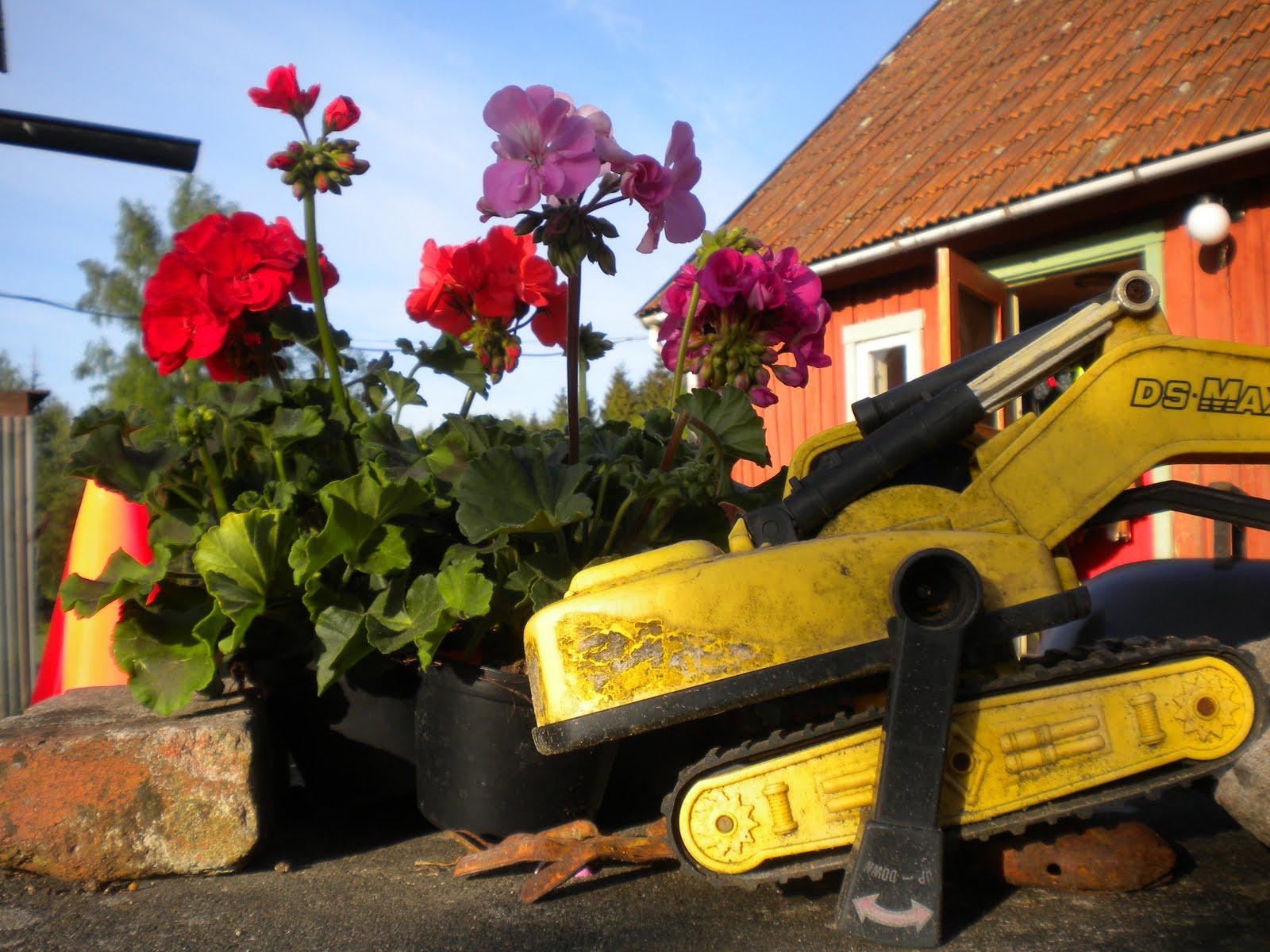 HÄstar och drama: maj 2011