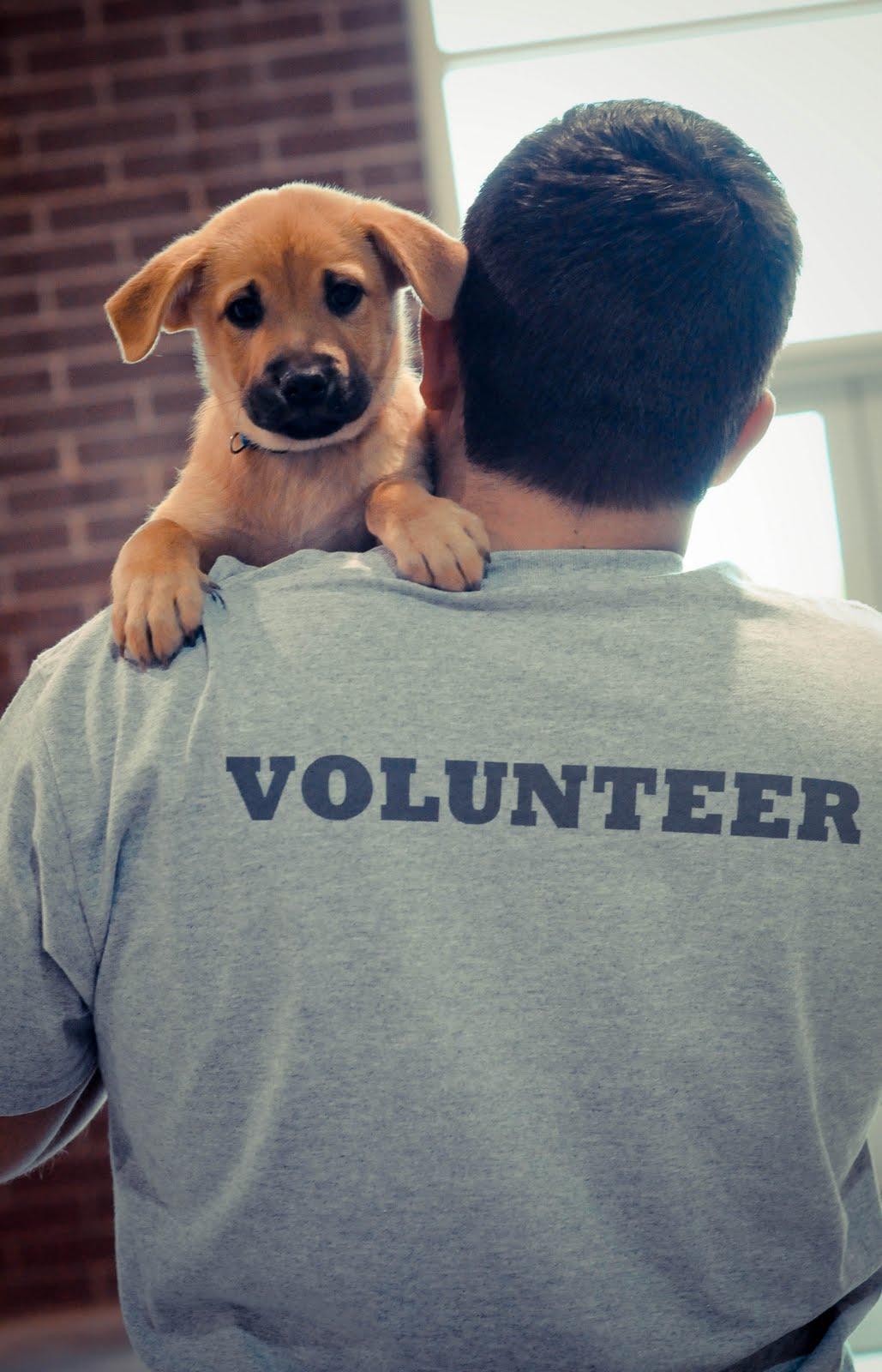 Humane Society Cat Adoption Video