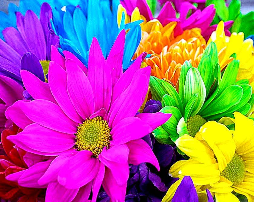 Beautiful Colourful Flowers Wallpapers Beautiful Flowers Wallpaper Free Download Colourful Wallpaper