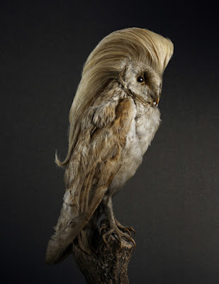 Liberace bird