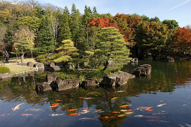 lago com carpas para jardim japonês; jardim japones
