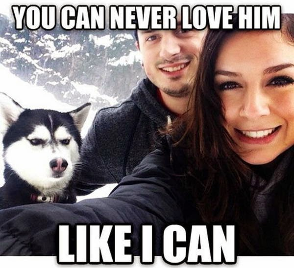 30 Funny animal captions - part 21 (30 pics), captioned animal pictures, husky
