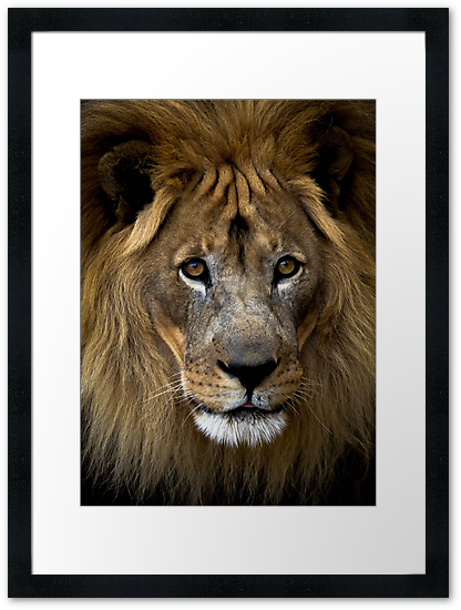 http://www.redbubble.com/people/dstewart43/works/13405597-lion-of-africa