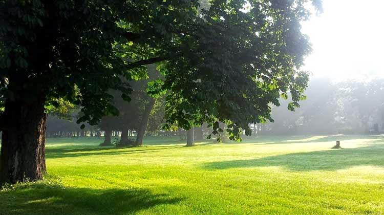 cahaya matahari pagi