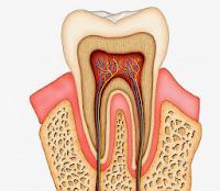 لب الأسنان