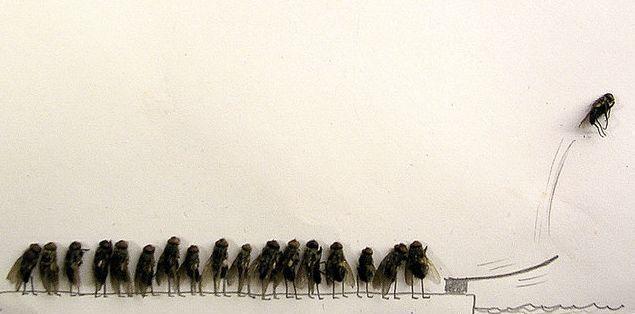 Karya Seni Dari Lalat Mati Yang Unik ! [ www.BlogApaAja.com ]