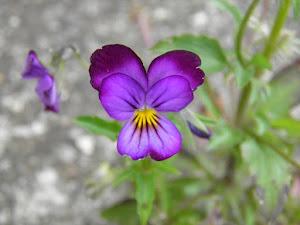 都内 格安 アパート Blogの花