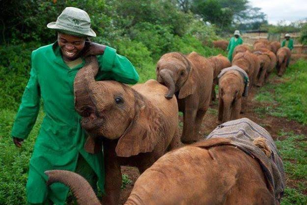 Nairobi Elephant Nursery, Kenya