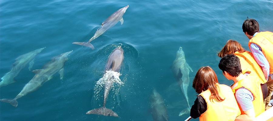 http://4.bp.blogspot.com/-tCi6rtKo8P8/VeYKox5dRdI/AAAAAAAHqpk/X3QW0hpuPCQ/s1600/sea-cruise-04.jpg