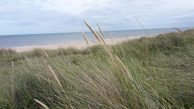 Project 365 2015 day 237 - Sand dunes at Winterton // 76sunflowers