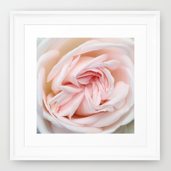 home decor - blush white rose photograph framed print / catherine masi