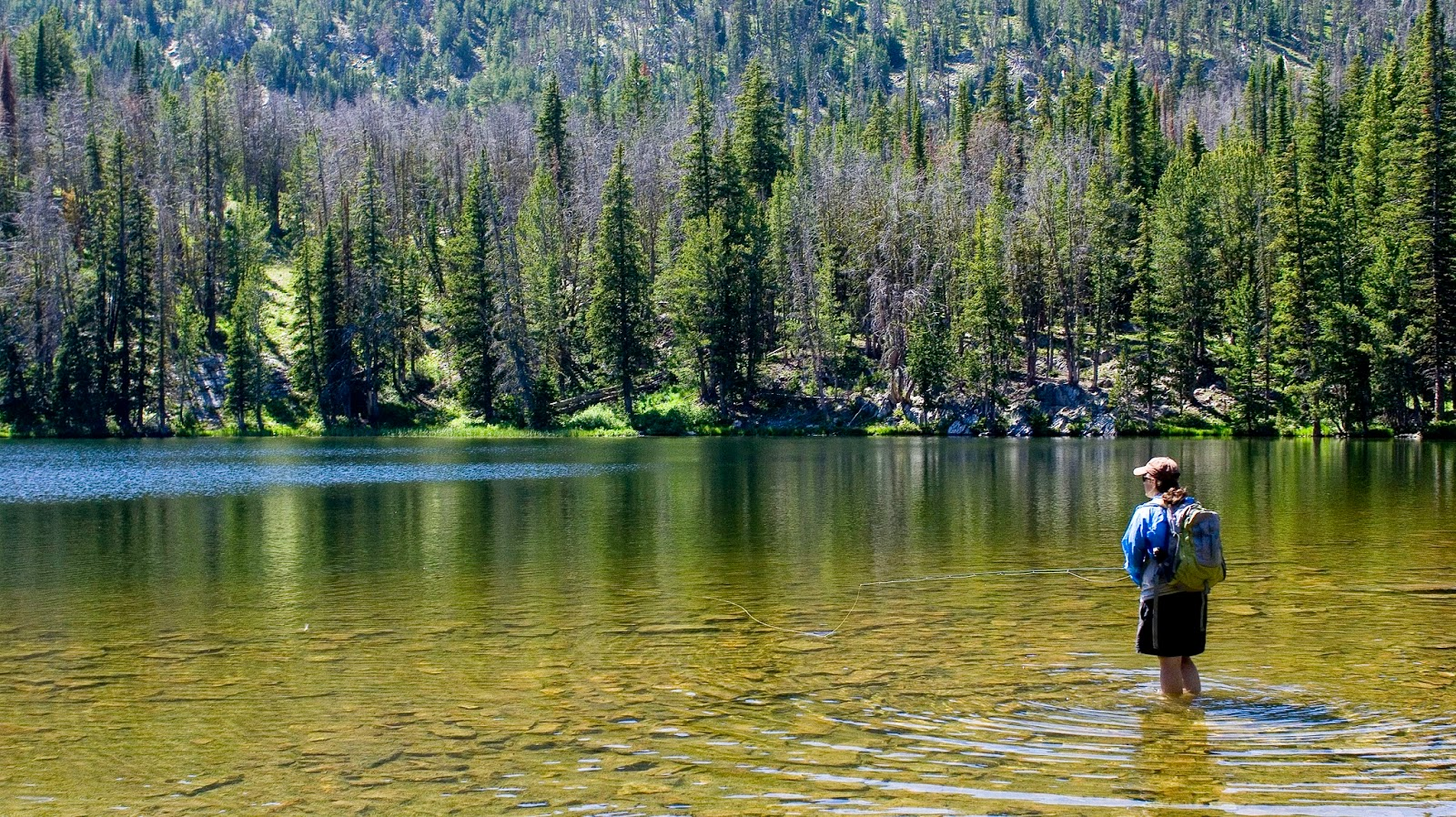 Golden Trout Fishing | Troutbugs How To Catch Golden Trout