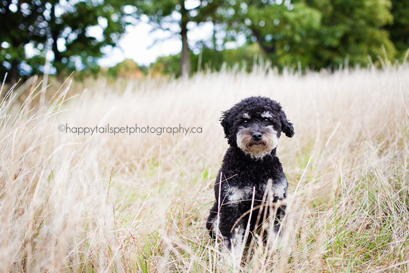 Pet photography session in North end Burlington park