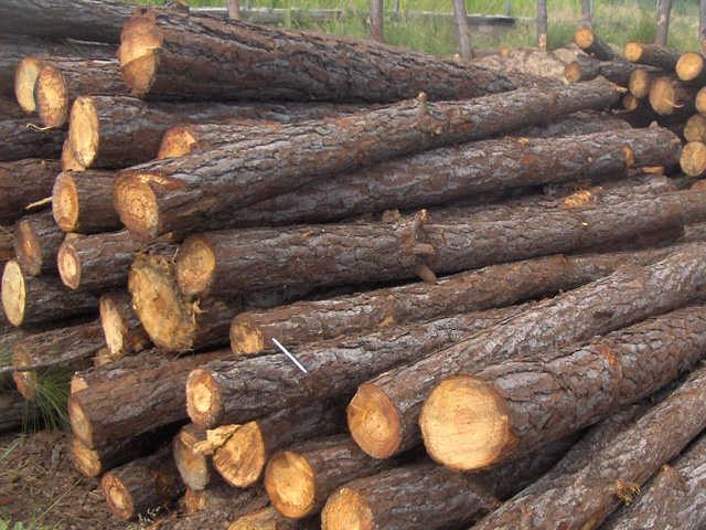 Madera que es la madera for Que es la veta de la madera