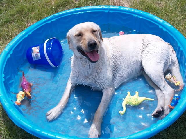 http://4.bp.blogspot.com/-tEMAi2_QPAg/UEkf81M769I/AAAAAAAAAzs/ypLc8tz8Tk8/s1600/Dog-in-pool.jpg