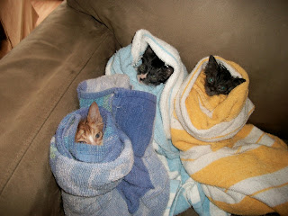 Abandoned, stray kittens rescued
