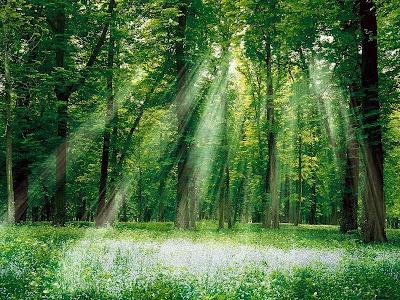 ormanın faydaları nelerdir