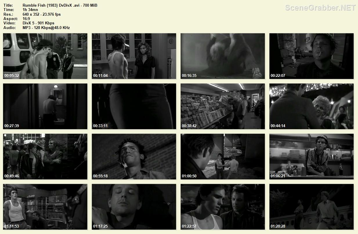 http://4.bp.blogspot.com/-tFWcT8AOZZo/T1rMSCtXGQI/AAAAAAAADzE/My5uY605xzI/s1600/Rumble+Fish+%7B1983%7D+DvDivX+%5BFrancis+Ford+Coppola%5D.avi.jpg