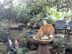 Kidney drinking from the bird bath