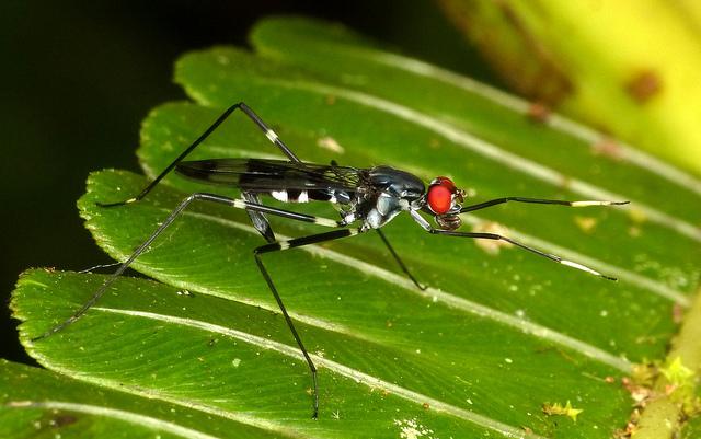 Incríveis fotografias de insetos em Macro
