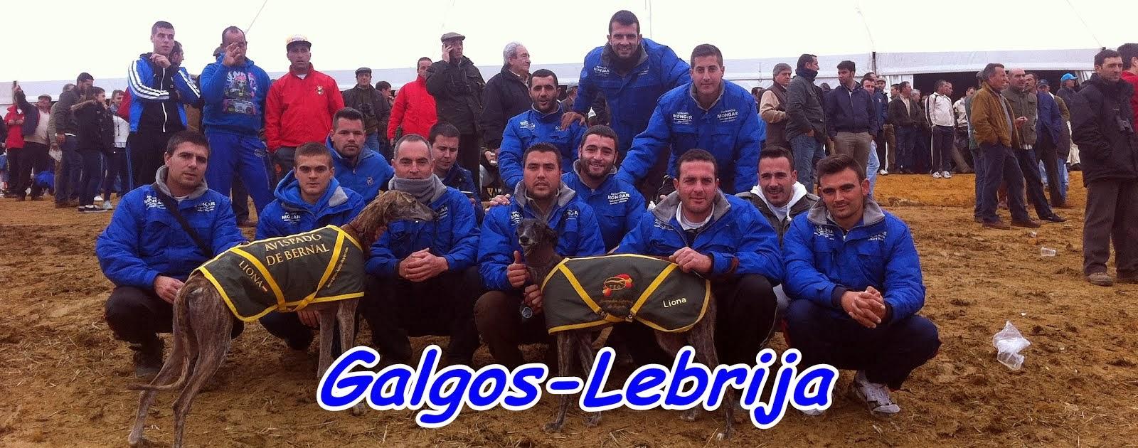 GALGOS LEBRIJA
