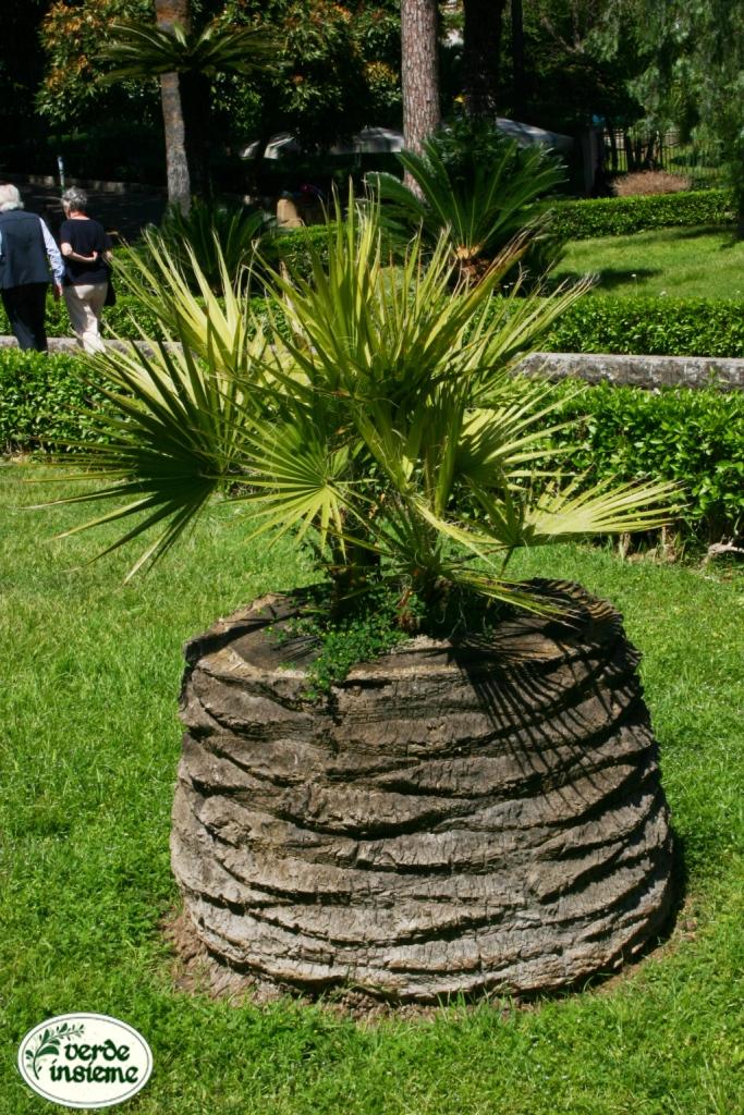 Maggio 2012 - Tipi di palma da giardino ...
