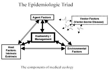 Hình 1: Bộ ba dịch tễ về mối tương quan của các yếu tố hình thành bệnh