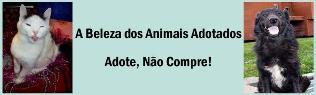 ADOTE! Ongs e Protetores no Brasil