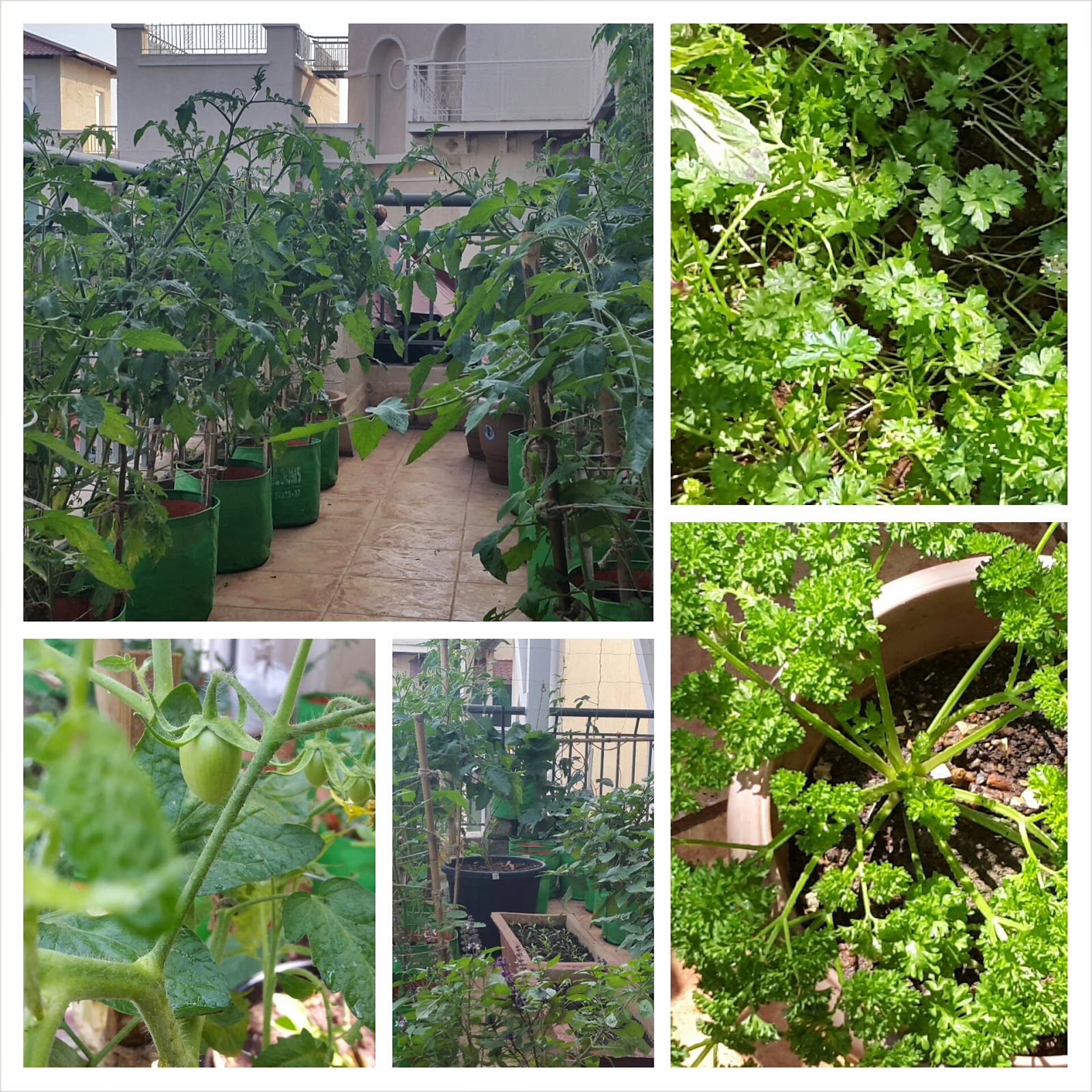 Terrace Garden Ideas Bangalore on starting an organic terrace garden.