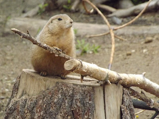 zoo, groundhog, ground hog, groundhog pic,