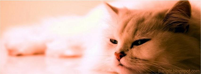 Foto Sampul Cute
