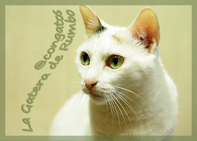 Gata ojos verdes Gatera Rumbo