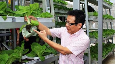 Sistem Pertanian Vertikal di Singapura