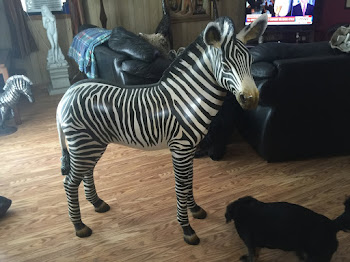Jet Wonders Why She Has a Striped Housemate