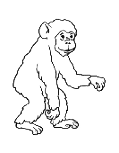 Orangutan Coloring Pages Printable