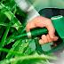 Tovább nőtt tavaly a német bioetanol termelés