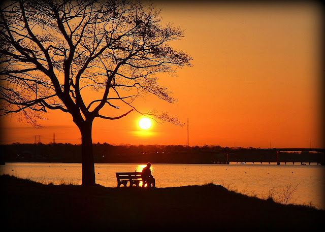 Sunset, Salem Willows, Salem, Massachusetts, sun, silhouette, contemplation
